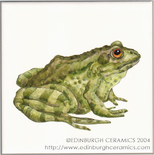 handpainted frog tile